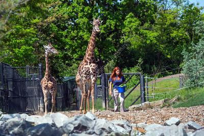 32086 Johanna Taylor Graduate Lead Ungulate Keeper at the Pittsburgh Zoo May 2016