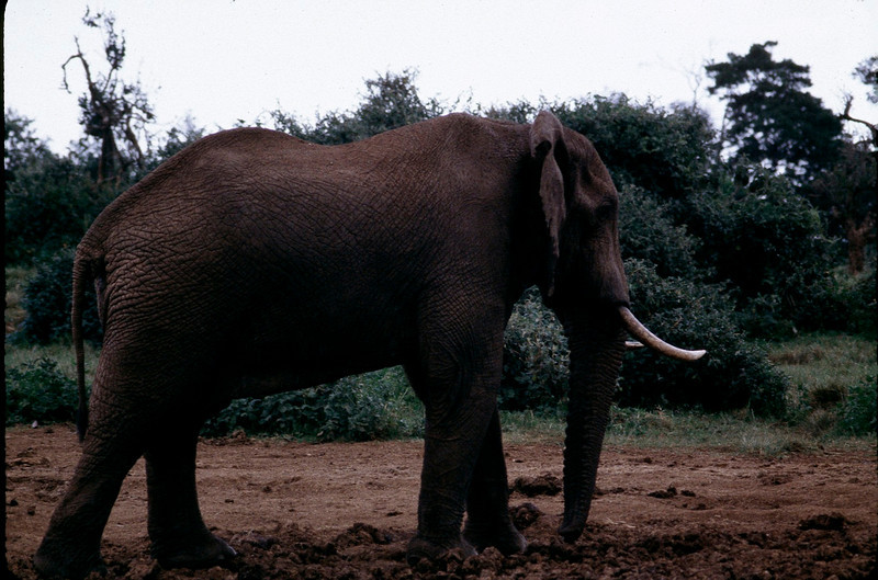 Kenya1_018.jpg
