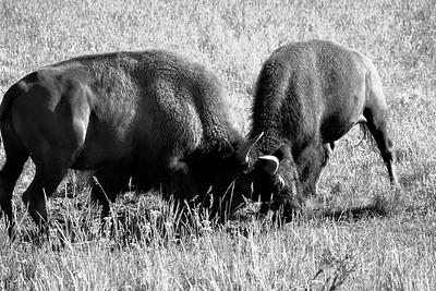 Wildlife Miscellany