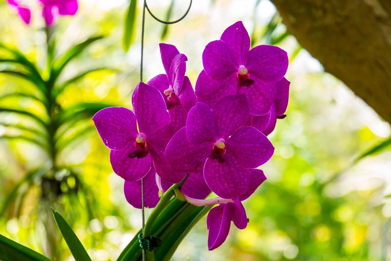 naples_botanical_garden_0066-LR.jpg