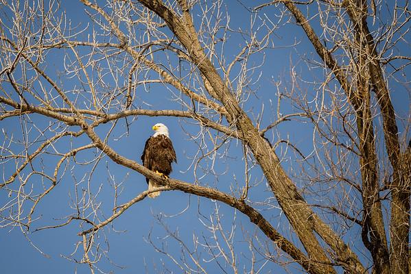 2020 02 29 Eagle