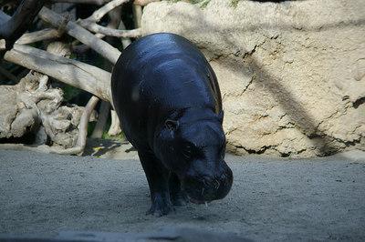 2.17.07 SD zoo