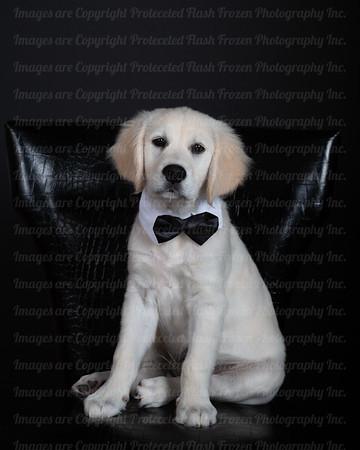 Paddington's A Good Boy