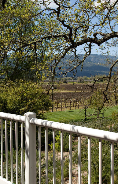 wine country and fence.jpg