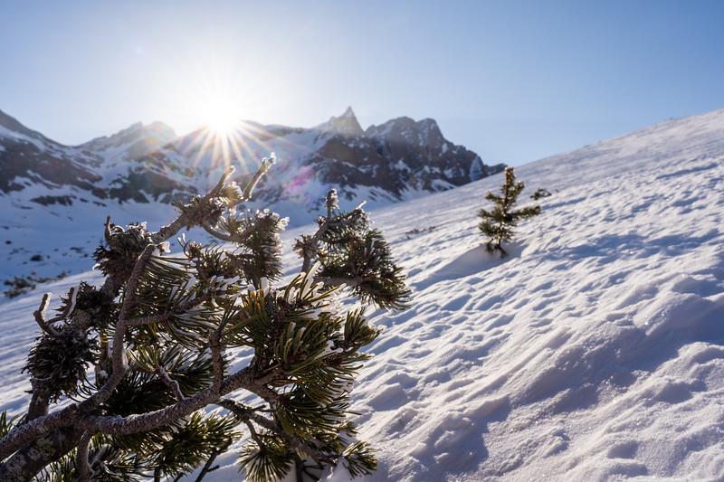 Winter-Rheinwald-05581.jpg