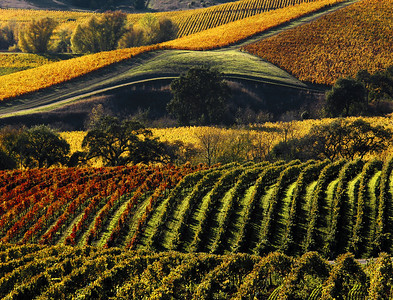Wine country vineyards of all seasons