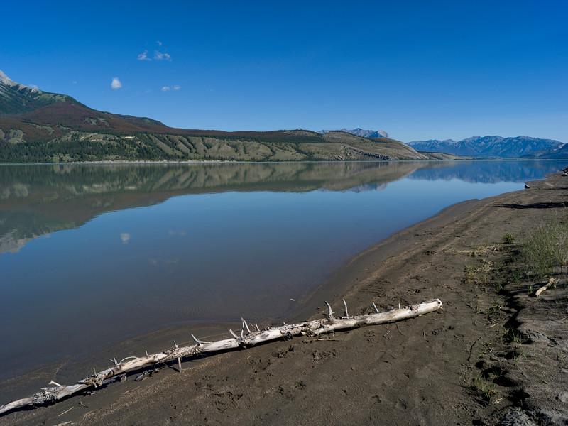 Driftwood at lakeside, Jasper Lake, Yellowhead Highway, Jasper National Park, Jasper, Alberta, Canada