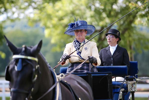2014 VILLA LOUIS-NOVICE HORSE/PONY