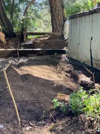 2020.07.03 Ryder planting vegetable garden