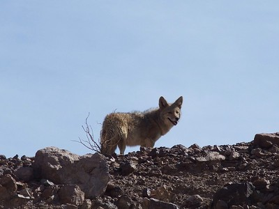 Death Valley National Park, CA -  2014