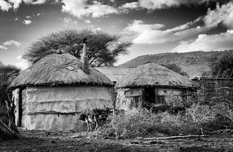 Laibon Maasai Tribe Village