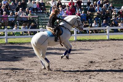 Royal Lipizzaner Stallions ~ flying horses