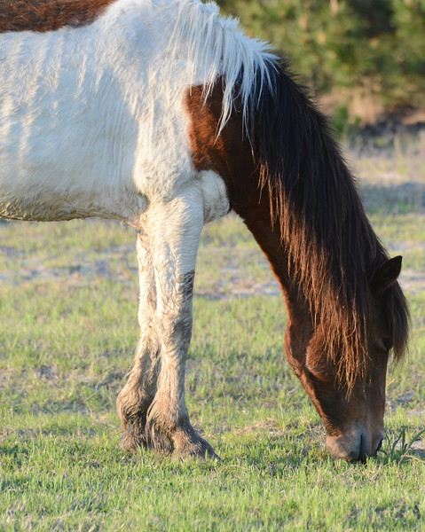 Horses 8 05_02_18.JPG