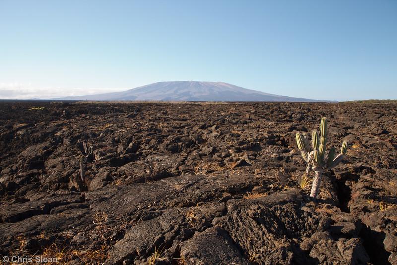 Punta Moreno, Galapagos, Ecuador (11-23-2011) - 675.jpg