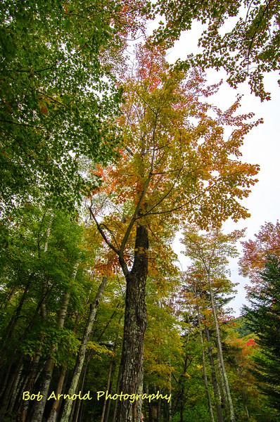 NH Foliage-26.jpg