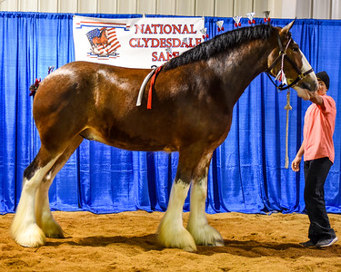2017 National Clydesdale Sale