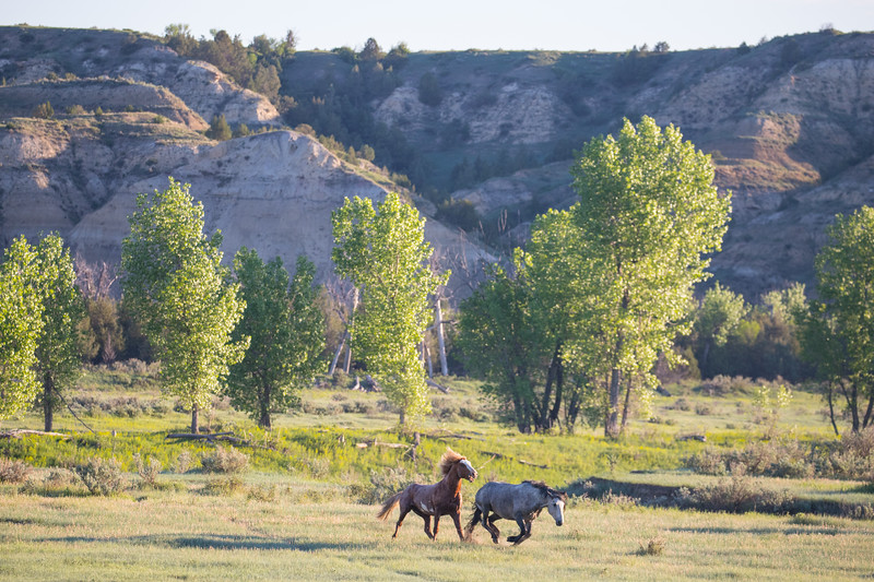 wild horses-3930.jpg