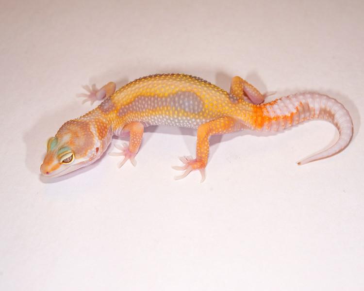 LG5315, $40, Tremper Albino, TSF, 18 grams