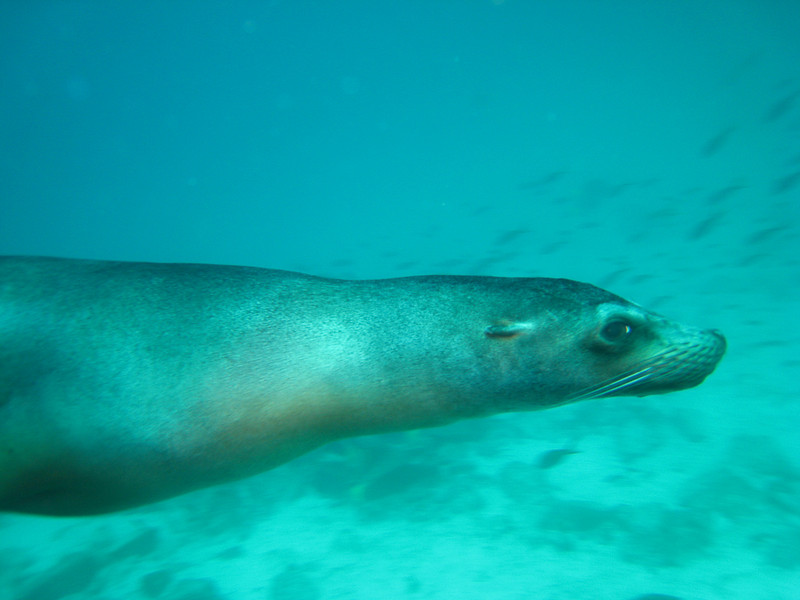 Diving in the Galapagos (141 of 392)