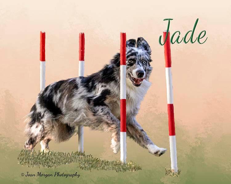 Jade4a.jpg