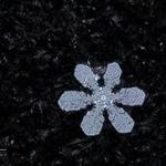 snowflakes-1322.jpg