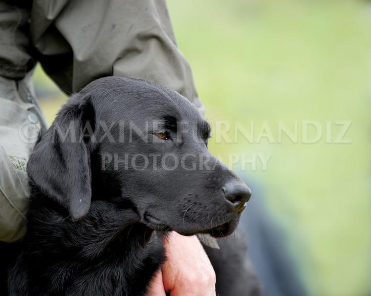 Dave Browns Dog--2-Edit.jpg