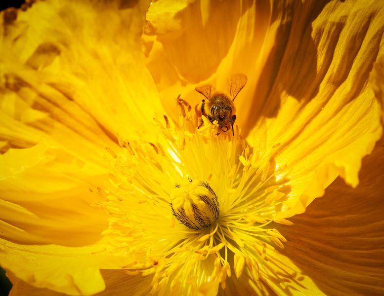 Garden 3, Ainsley House, Campbell, California, 2009