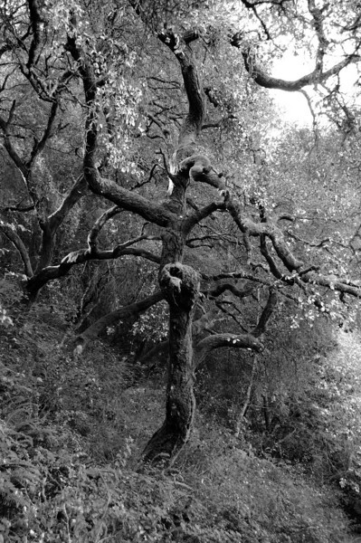 Redwoods Regional Park Oakland, California
