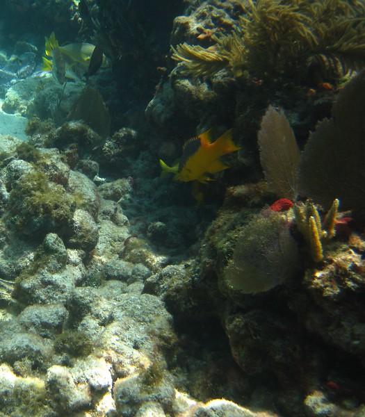 diving Coffins Patch