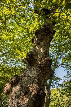 2015 Murphy-Hanrehan State Park Reserve