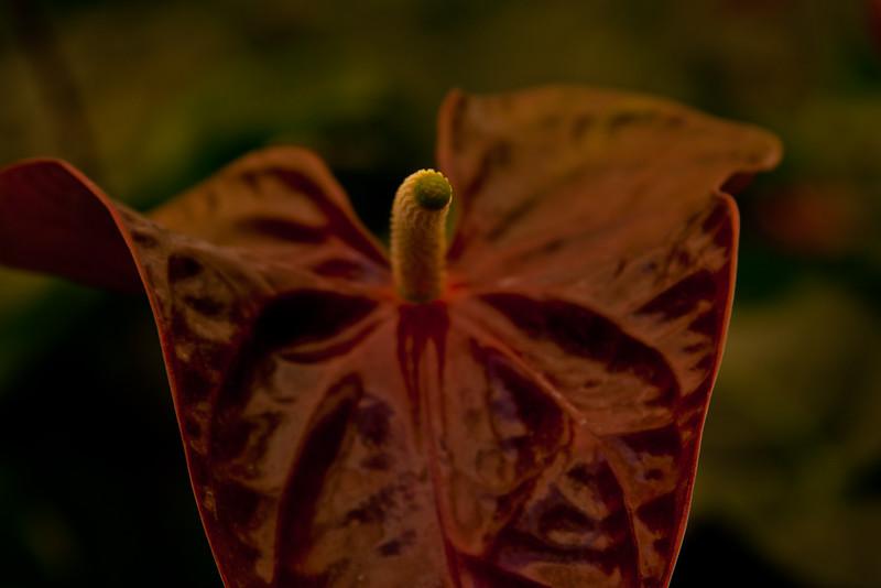 Nature in Chiapas 5:Journey into Chiapas Mexico