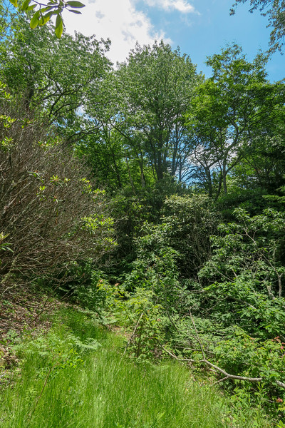 Green Mountain Trail -- 5,180'