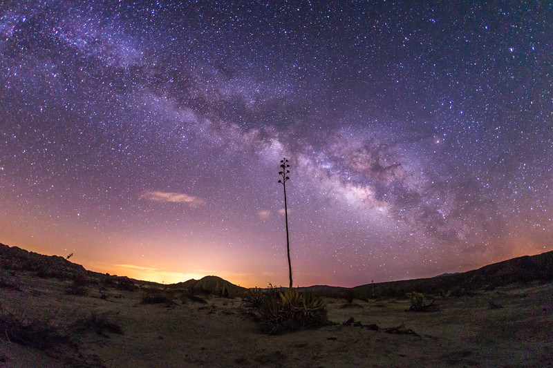 Milky Way and yucca in Anza-Borrego Desert State Park
