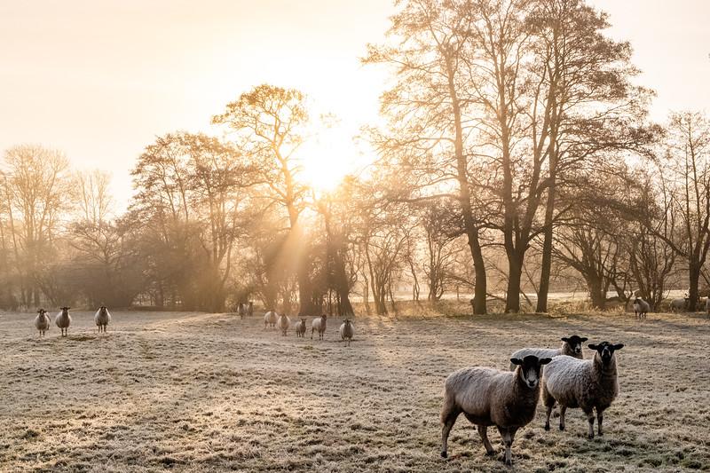A frosty start (15 of 20).jpg