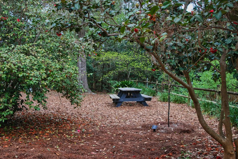 Picnic table in Camellia Garden