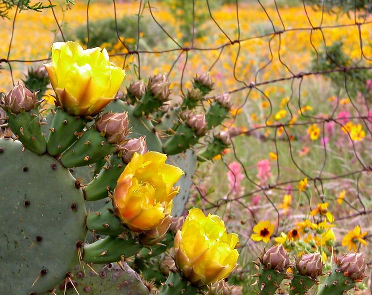 Park Cactus edited.JPG