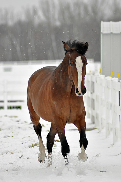 Snowy Dalanta 122 RETOUCHED.jpg
