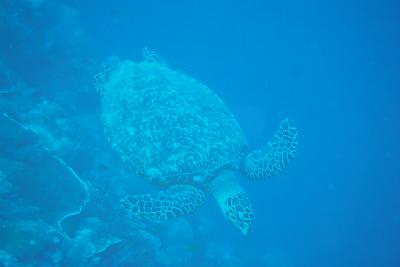 2016 帛琉潛水團