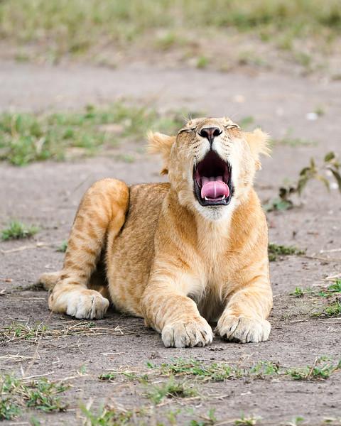 safari-2018-119.jpg