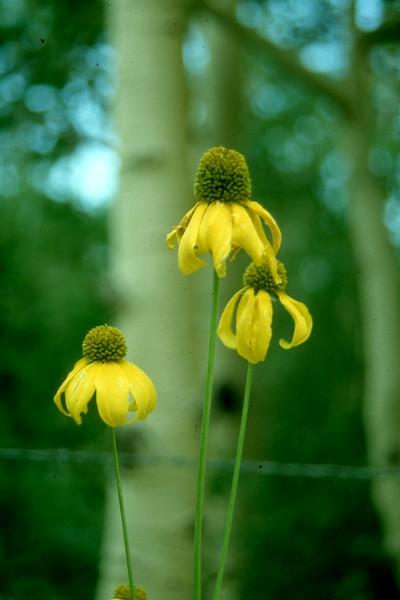 amh FLOWERS (1228).jpg