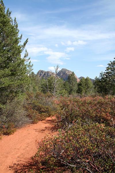 Long Canyon Trail before entering Long Canyon.  Lots of manzanitas!