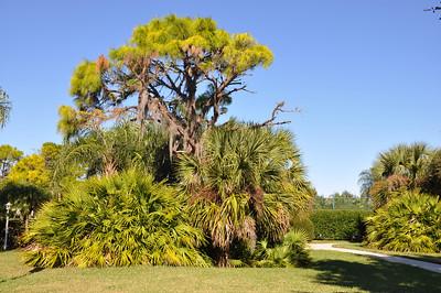 Nature at Stoneybrook