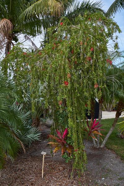 Useppa-Botanical-Walk-267.jpg