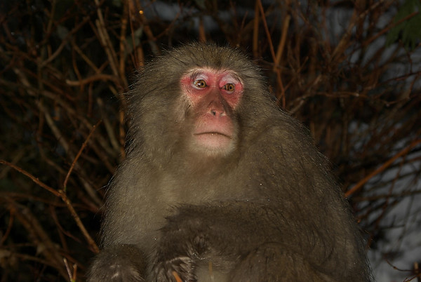 Japan Trip 07-08 Snow Monkeys
