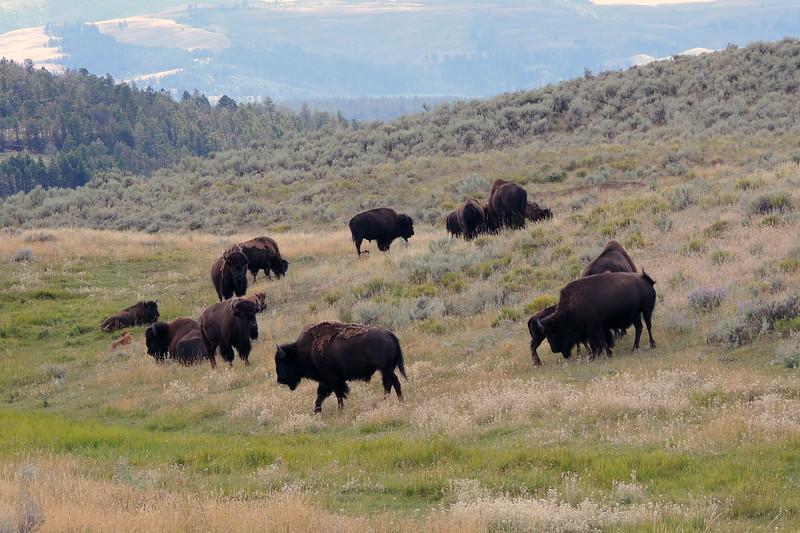 Yellowstone (14).jpg
