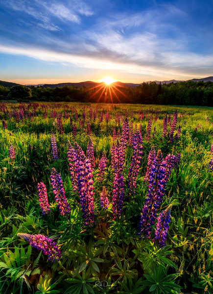 Sugar Hill Sunrise