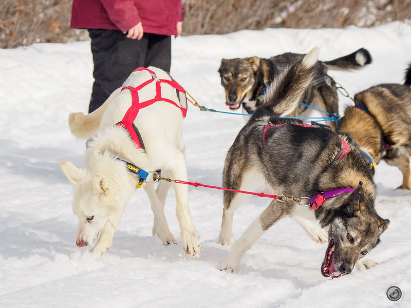 20190325_Blaire_and_Liz_Mushing_45.jpg