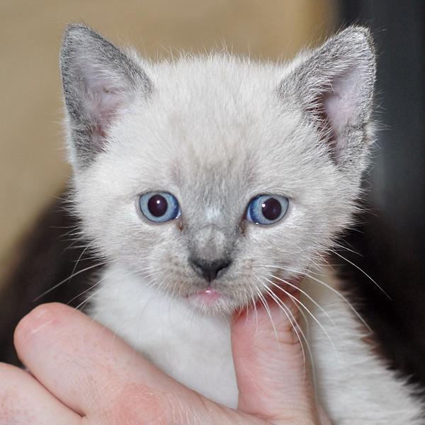 2007 04 12 - New Kitty 059.JPG