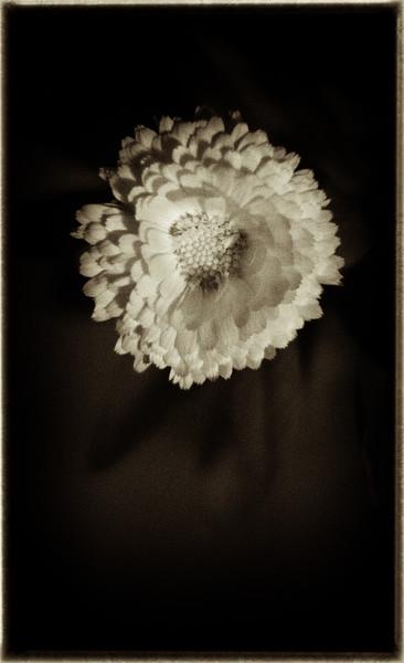 night flower 112914--3.jpg