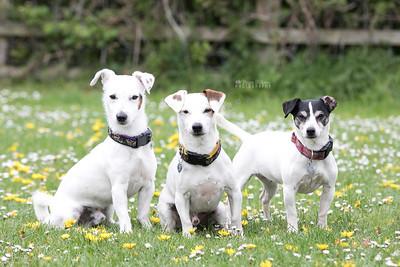 Tripp, Lottie & Wotton